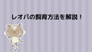 【保存版】レオパって?飼育方法・寿命・餌・生態をご紹介!わりと簡単に飼育できます。