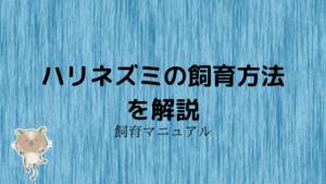 【保存版】ハリネズミの飼い方!ベストな飼育方法・飼育環境を全て紹介!