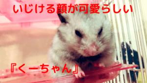 いじけた顔がとっても可愛いくーちゃん。他17匹を多頭飼いする石井さんに苦労話を聞いてみた!