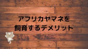 【必読】アフリカヤマネを飼育する時に発生する11のデメリット