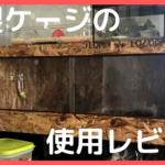 【使用レビュー】「ViGill爬虫類木製ケージ製作所」を紹介。
